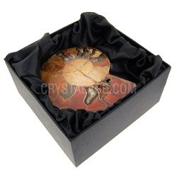 Fossils for sale Ammonite Fossil Gift Box £14.99