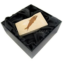 Fossils for sale Crystal & Fossil Gift Box £22.99