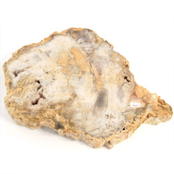 Fossils for sale Petrified Wood